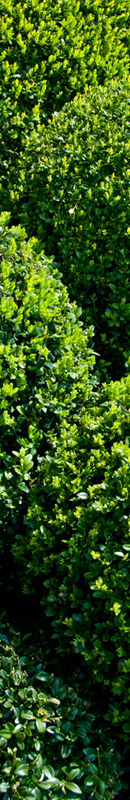 Michelle Garrett Photographer - Sidebar Image - In The Garden Colours