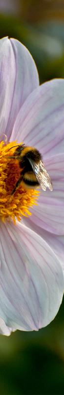 Michelle Garrett Photographer - Sidebar Image - Peoples Passion Cranberry Harvest