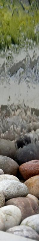 Michelle Garrett Photographer - Sidebar Image - In The Garden Elements