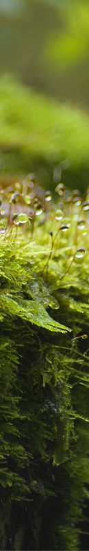 Michelle Garrett Photographer - Sidebar Image - In The Garden Green Plants