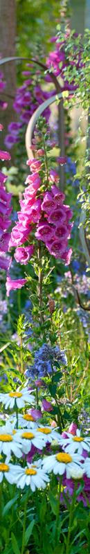 Michelle Garrett Photographer - Sidebar Image - New Images Hampton Court