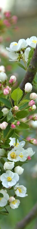 Michelle Garrett Photographer - Sidebar Image - Seasons Spring