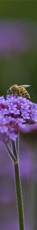 Michelle Garrett Photographer - Sidebar Image - Nature Wildlife